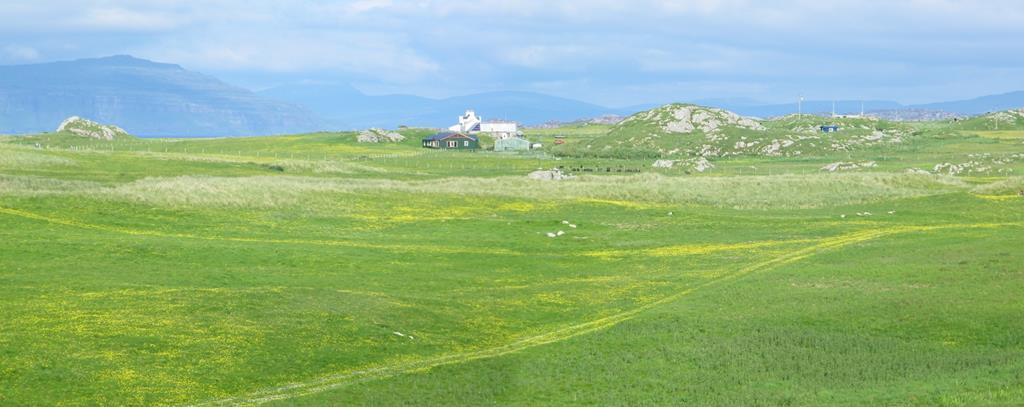 Wild Flowers Isle of Iona
