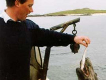 Seals Isle of Iona