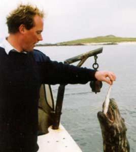 Wildlife, Seals, Isle of Iona
