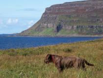Burg Ardmeanach Peninsular Isle of Mull