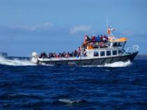 Staffa Tours, Isle of Staffa