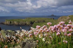 Wildflowers lunga Inner Hebrides  Mull Scotland