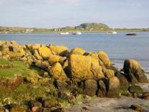 Wild flower Lichen Fionnphort Isle of Mull