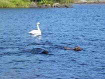 Loch Pottie Fionnphort Isle of Mull