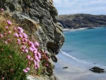 Fort Dun Ardalanish Sea Pinks Isle of Mull