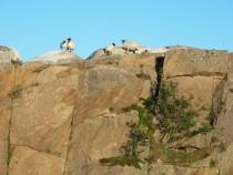 Tormore granite quarry Fionnphort Ross of Mull Isle of Mull
