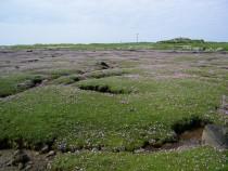 Wildflowers sea pinks Burnside Isle of Mull