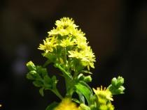 Wild flower Fionnphort Isle of Mul