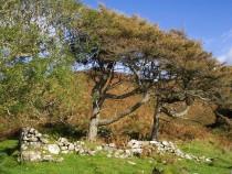 ruin Cullimore Burg Ardmeanach Isle of Mull