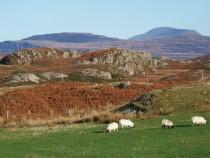 Fidden Fionnphort Isle of Mull
