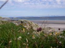 Wildflowers Ardalanish Beach Isle of Mull