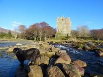 Walking,Moy Castle,Loch Buie,Isle of Mull, Hebrides