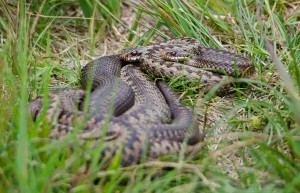 boat-trips-and-tours, adder