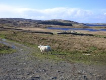 Mull, walks, Kilvickeon church
