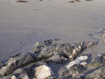 Mull Geology schist and quartz
