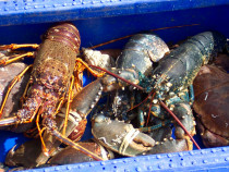 fishing for crab, lobster, crawfish, prawns and scallops Fionnphort and Bunessan Ross of Mull Isle of Mull
