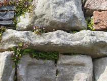 Sheela na gig Iona nunnery Isle of Iona