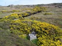 Wild flower Burnside Knockvologan Isle of Mull