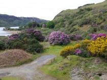 Wildflowers Rhoddy and Gorse Loch Uisg Isle of Mull