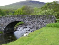 Derryguaig Isle of Mull