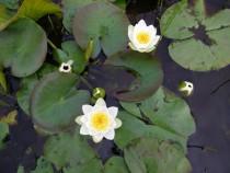 Wildflowers water lilys Pottie Mull