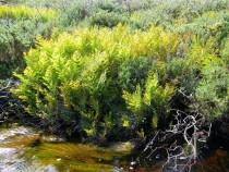 Wild flower Isle of Mull Ferns
