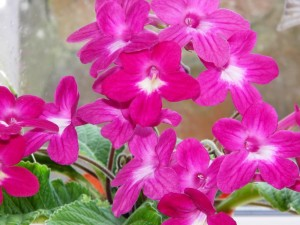 Streptocarpus Seaview Bed and Breakfast,accommodation