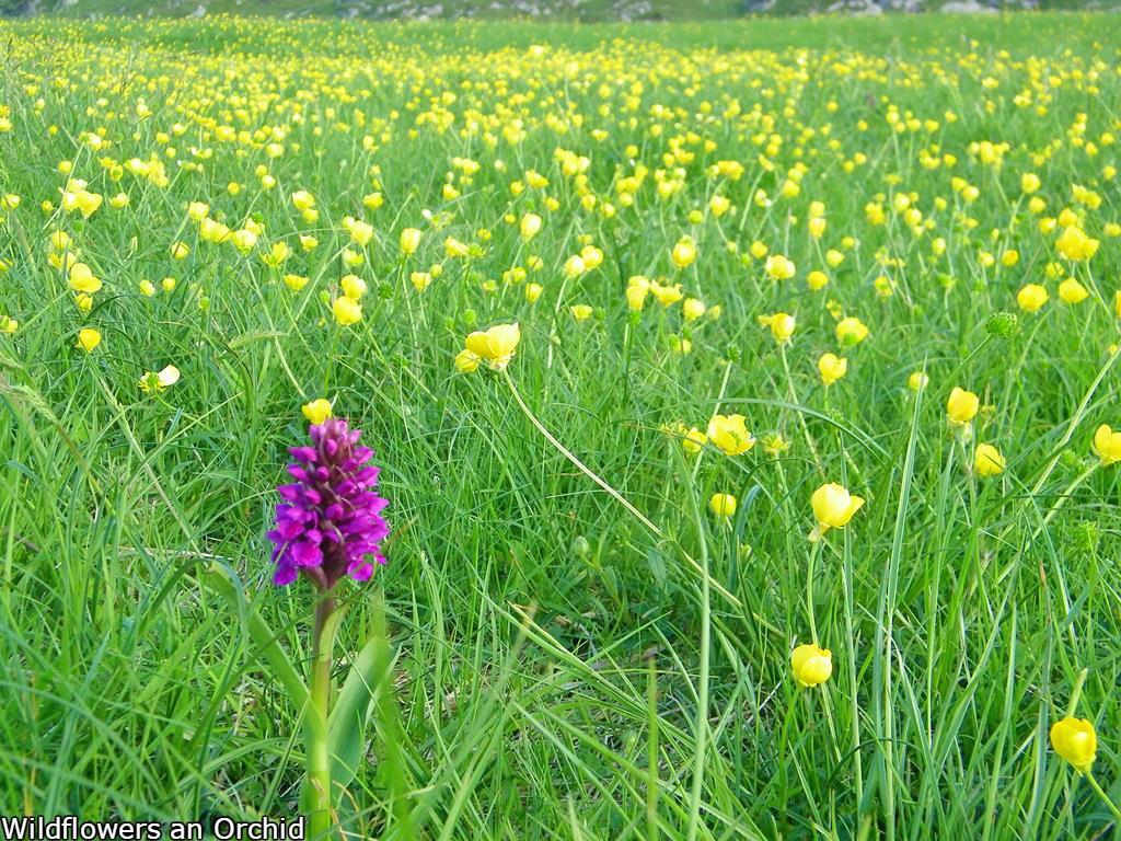 Orhid,Isle of Iona