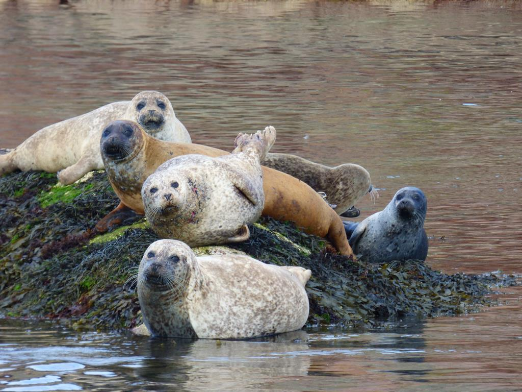 Seals, Bull Hole, Fionnphort, Isle of Mull
