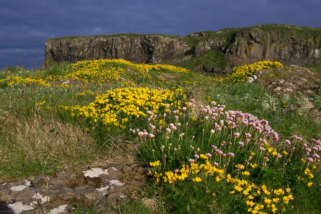 boat-trips-and-tours, Lunga, wildflowers