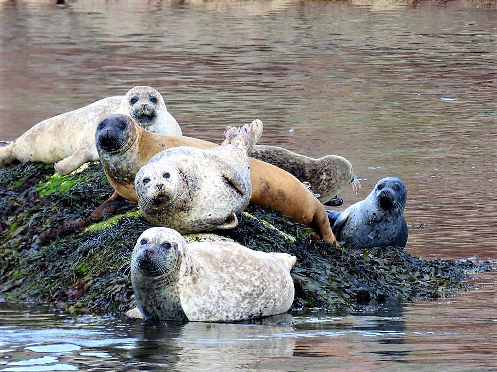 Tarriff and Offers,seals, Fionnphort,Mull