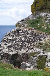 boat-trips-and-tours, Harp Rock, Lunga, Treshnish