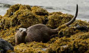 Otter, boat-trips-and-tours